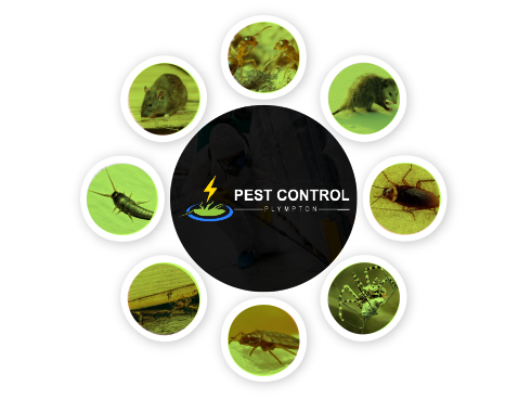 Pest Control Plympton