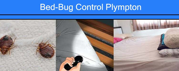 Bed Bug Control Plympton